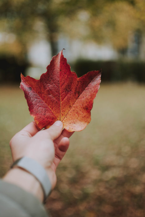 Picture of hand holding red maple leaf