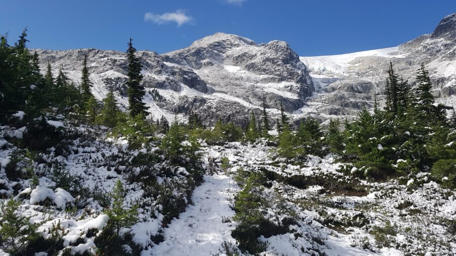 Snowy peaks and forest by Iceberg Lake - One of the Best Whistler Hikes