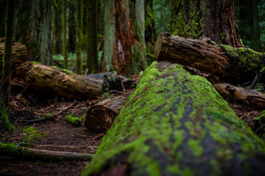 Rain-soaked logs in one of the best hikes in Vancouver: the temperate rainforest of the Pacific Spirit Regional Park