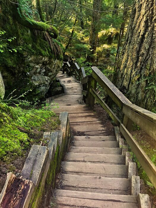The stairs going down to Lynn Canyon, one of the best hikes near Vancouver