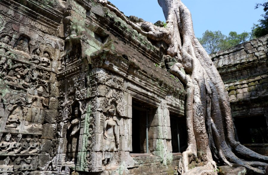 A Large Tree on the Ruins of Ta Prohm, Angkor Wat Near Siem Reap, Cambodia - A Stop on My Itinerary for Southeast Asia