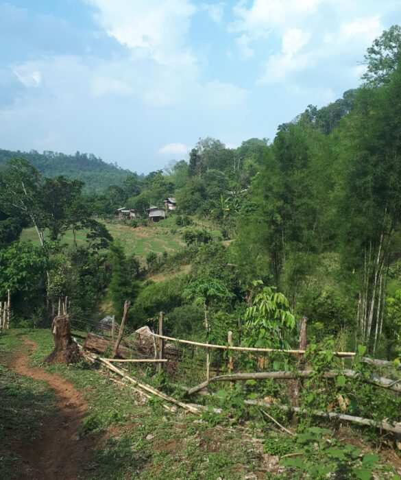 The Beautiful Green Forest Surrounding a Village in Northern Thailand Near Chiang Mai