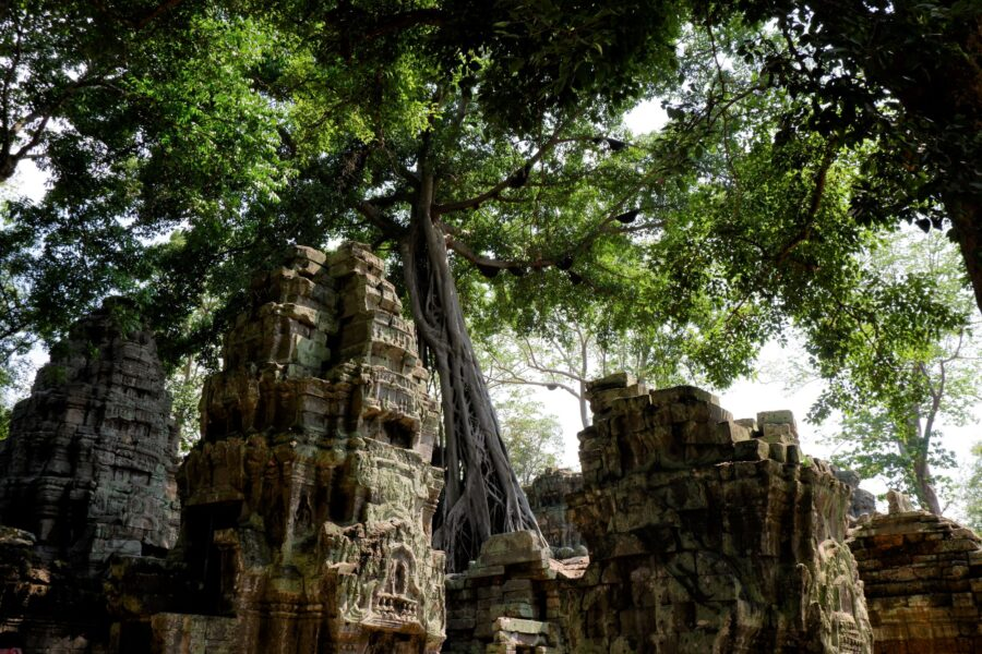Trees Growing Out of the Ancient Temples at Angkor Wat Park