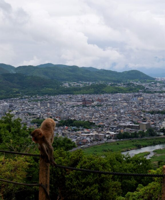 A monkey chilling on the rope fence at the Kyoto monkey park, with panoramic views of Kyoto