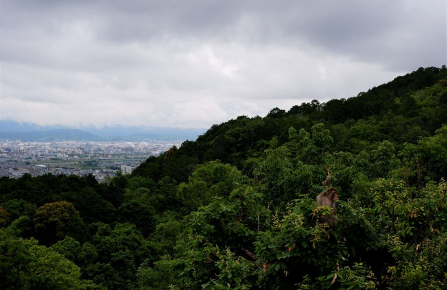 A monkey in a tree at Arashiyama, with its back against the view of Kyoto at the Iwatayama Monkey Park