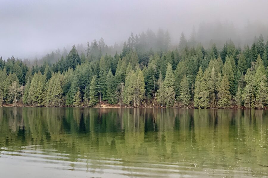A view of Buntzen Lake, the forest, and fog along the trail towards Diez Vistas trail in the Tri-cities, one of the great hikes near Vancouver, BC