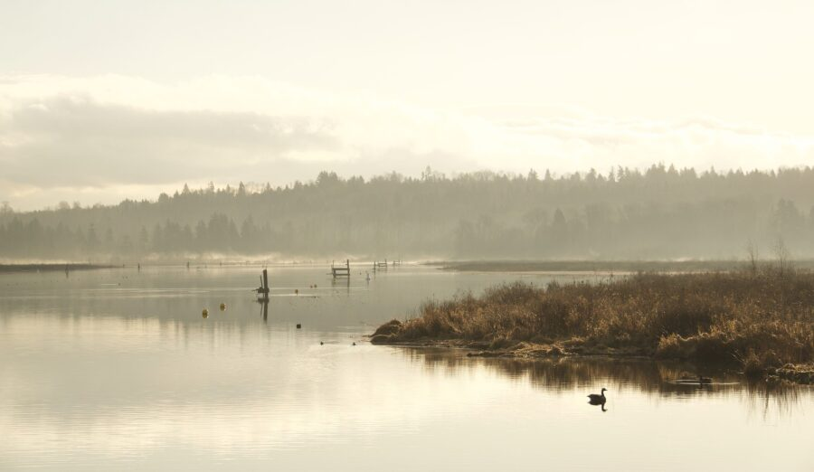 A hazy Burnaby Lake, with a duck - One of the hikes near Vancouver