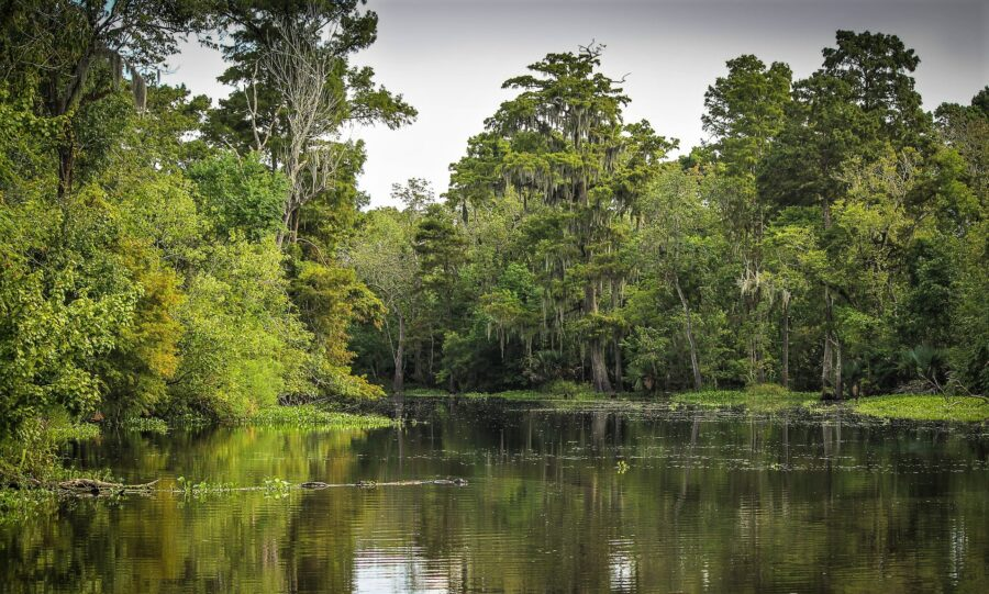 The lush greenery and swamps of the Louisiana Bayou, perfect for your 3-day New Orleans itinerary