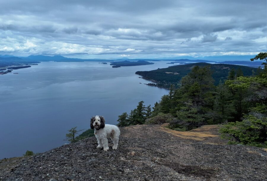 My dog at the summit of Mount Erskine Provincial Park, one of the best things to do in Salt Spring Island!