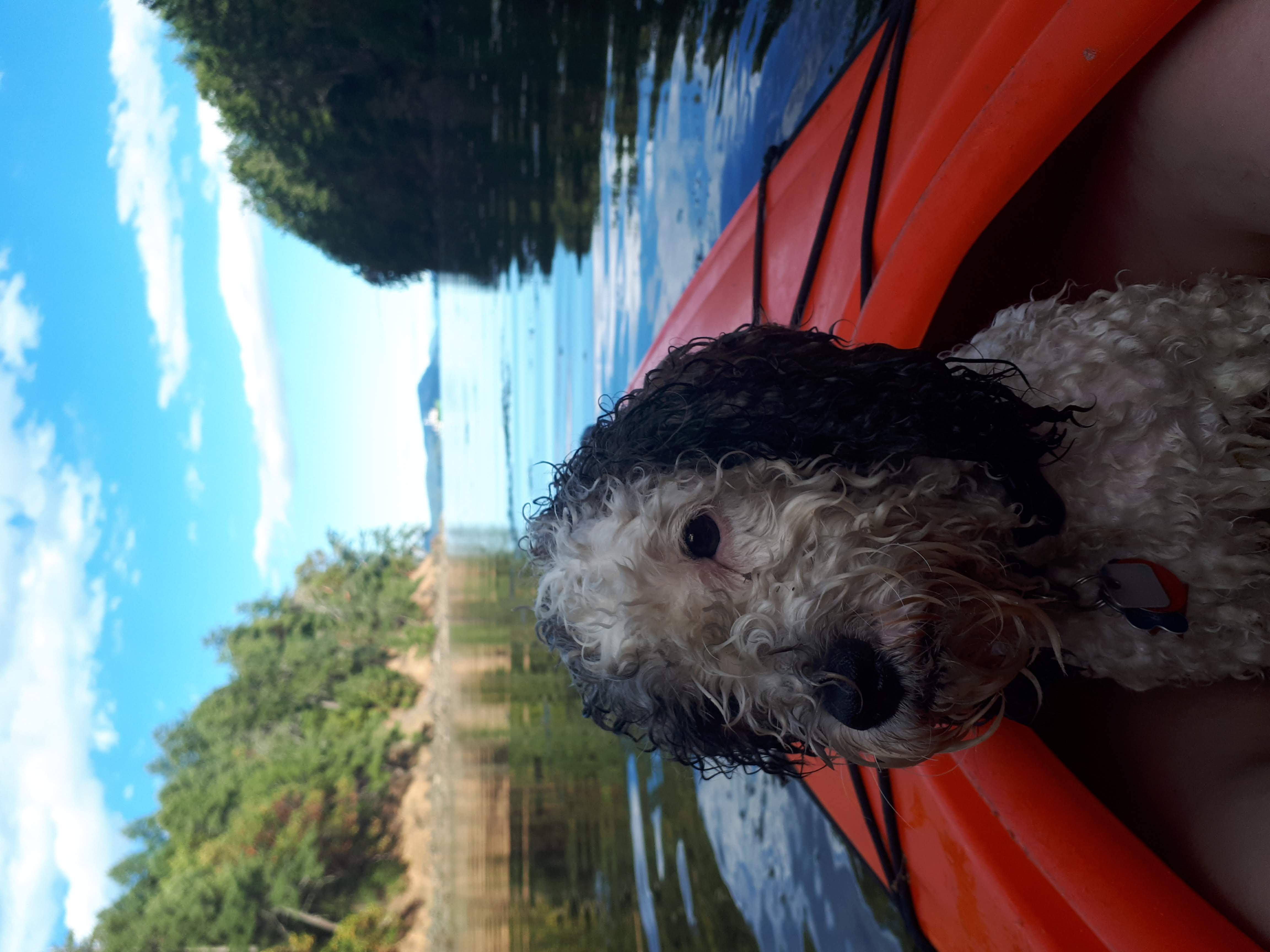 My dog at the end of the Salt Spring Island kayaking expedition, wet, sitting in the orange kayak with views of the Pacific Ocean and the bay behind him